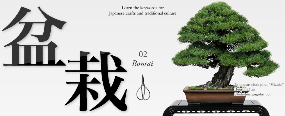 Learn the keywords for Japanese crafts and traditional culture 02「bonsai」